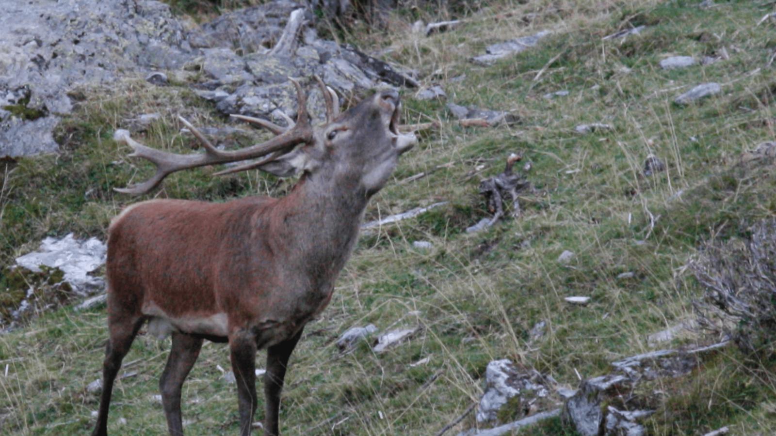 Chasse et randonnée en Valais: que faut-il savoir ?