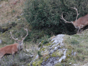 Ouverture de la chasse: comment randonner en sécurité?