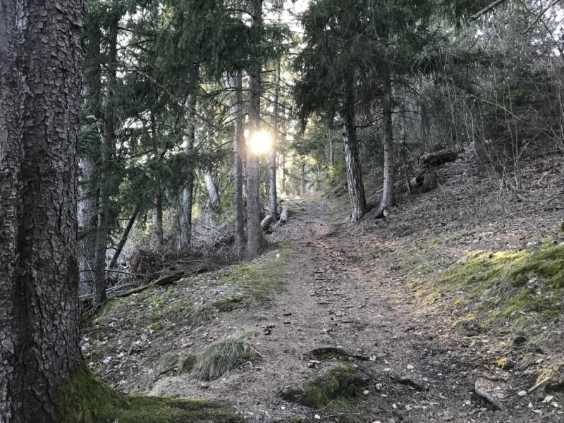 Le choix du sentier en nature