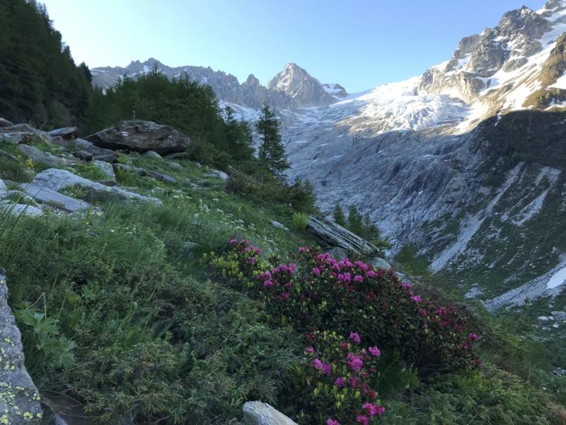 Rhododendrons et glacier du Trient