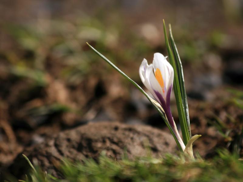 La perfection peut se lire dans chaque fleur, dans chaque brin d'herbe!
